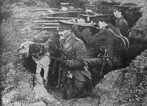 Les animaux de la guerre: le chien soldat et compagnon