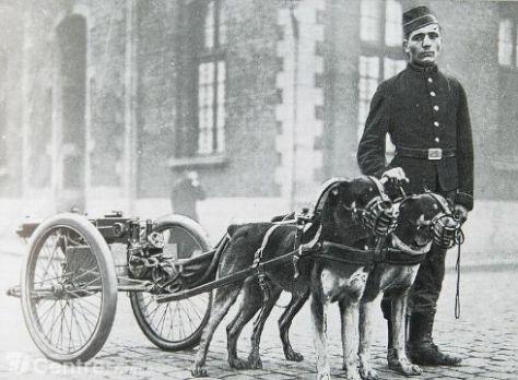 museum-expo-animaux-dans-la-guerre-le-chien_1702465