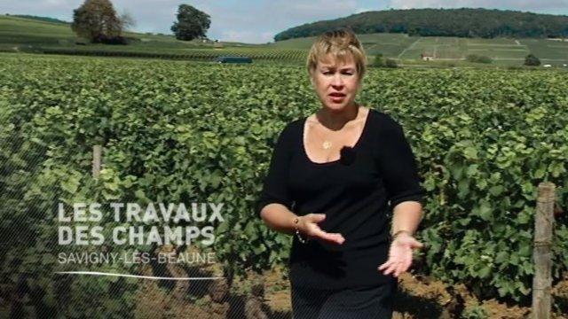 (Vidéo) Les travaux des champs