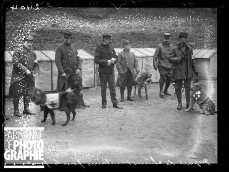 chiens 1915
