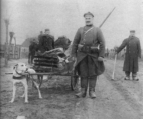 369/journal du 8 août 1915:(diaporama) Médecins de la grande guerre