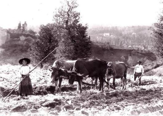 Dans les champs, des enfants conduisent des attelages