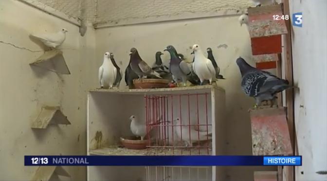 (vidéo)Verdun : Vaillant, le pigeon de combat