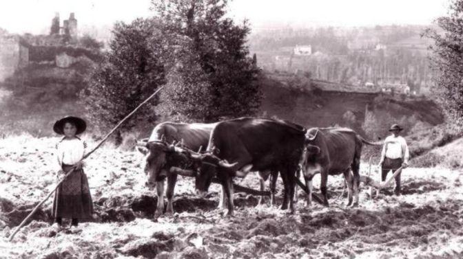 1188/3 novembre 1917: dans les champs, des enfants conduisent des attelages
